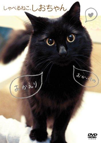 しおちゃん猫