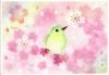 私のメジロと桜