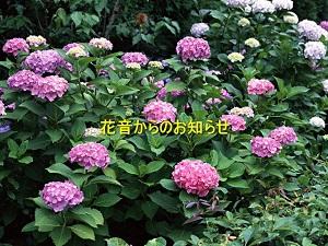 entry_img_102.jpg