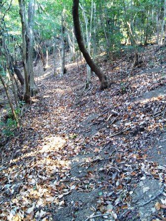 SH3H2575柏尾山への道
