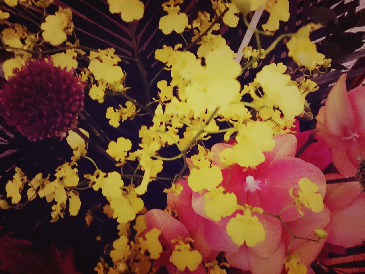 なっちゃんからの花3