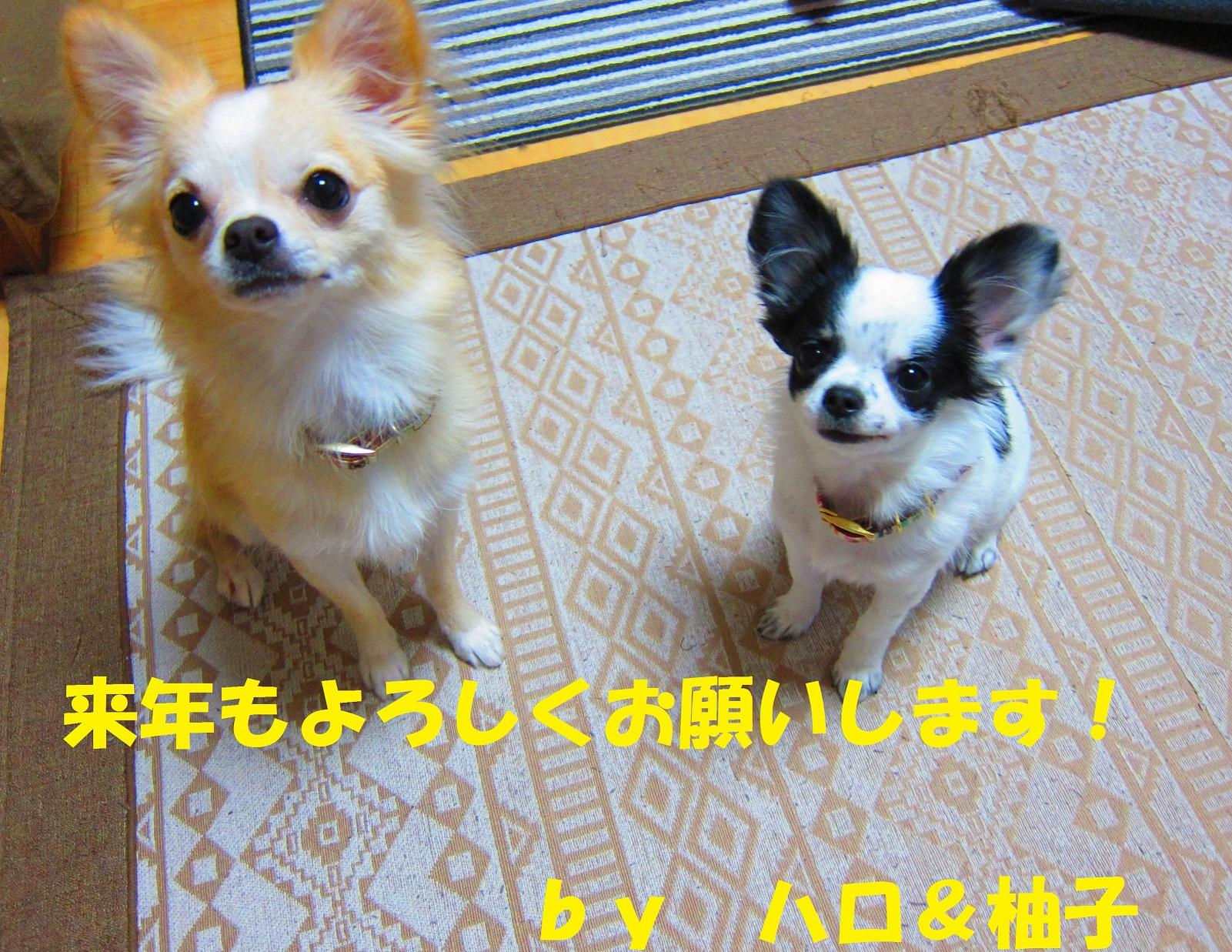IMG_69082.jpg