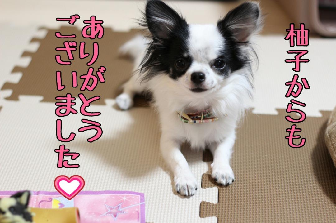s_LINEcamera_share_2015-06-09-10-31-30.jpg