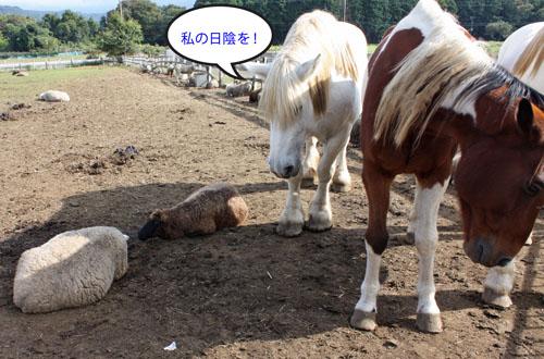 馬と羊 (1)
