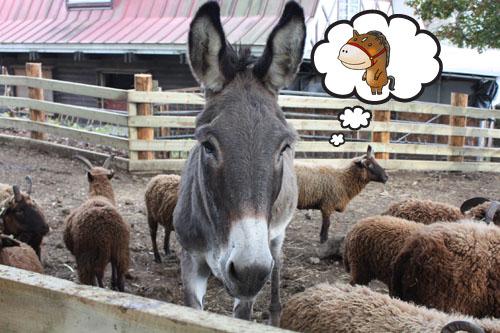 馬と羊 (5)