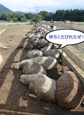 馬と羊2 (2)