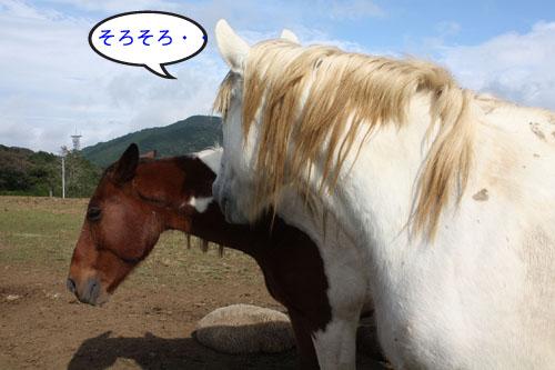 馬と羊2 (3)