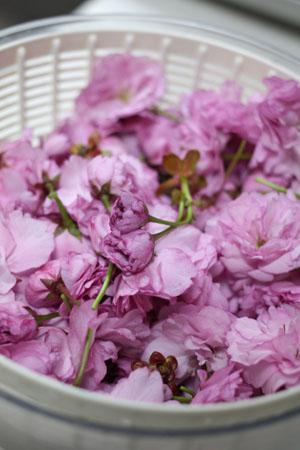 桜の塩漬け (5)