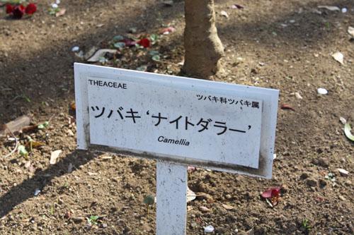 ツバキナイトライダー (1)