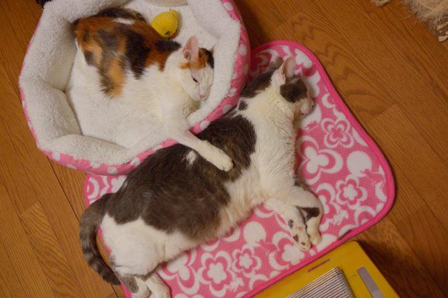 メリー&ギンちゃんv04ブログ