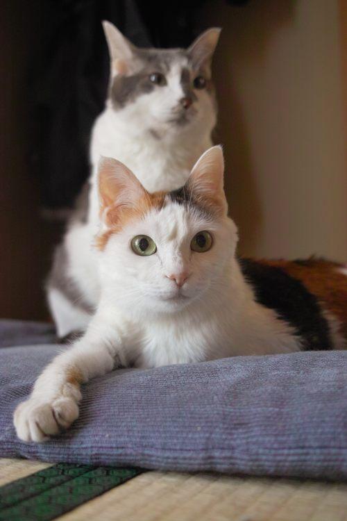 メリー&ギンちゃんx14ブログ