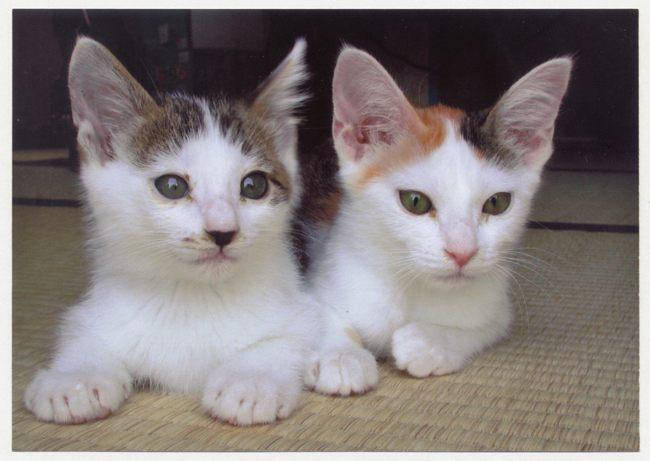 子猫時代01ブログ