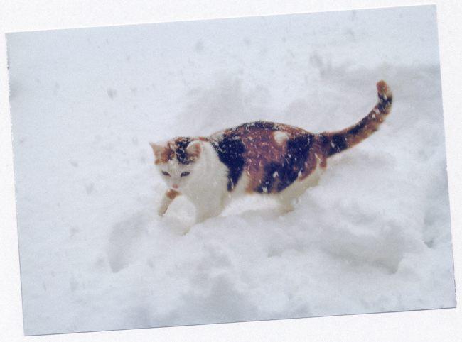 成猫02ブログ