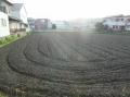 4草刈りしなければ