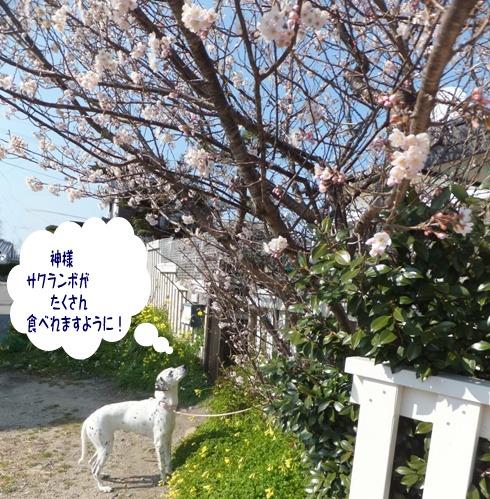 blog_0314_153157.jpg