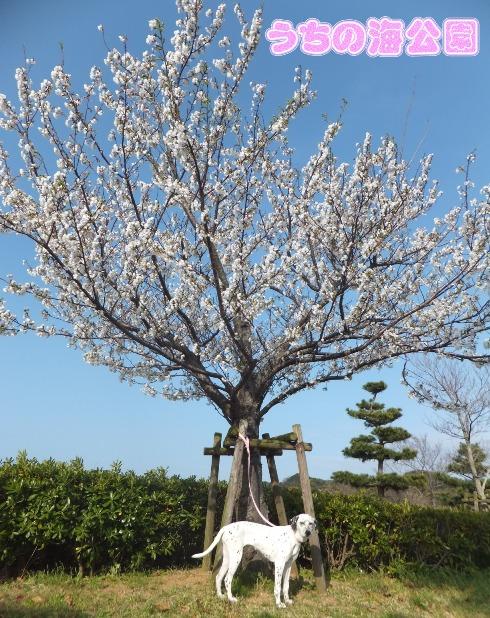 blog_0402_165008.jpg