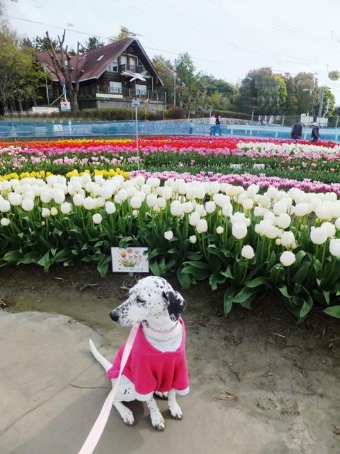 blog_0412_094803.jpg