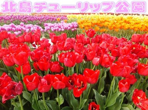 blog_0412_095015.jpg