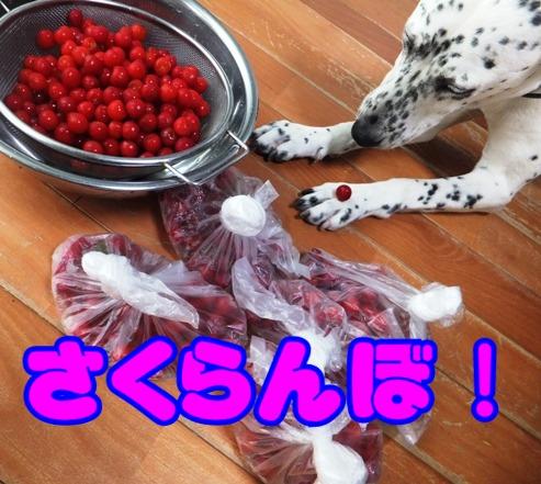 blog_0503_162350.jpg