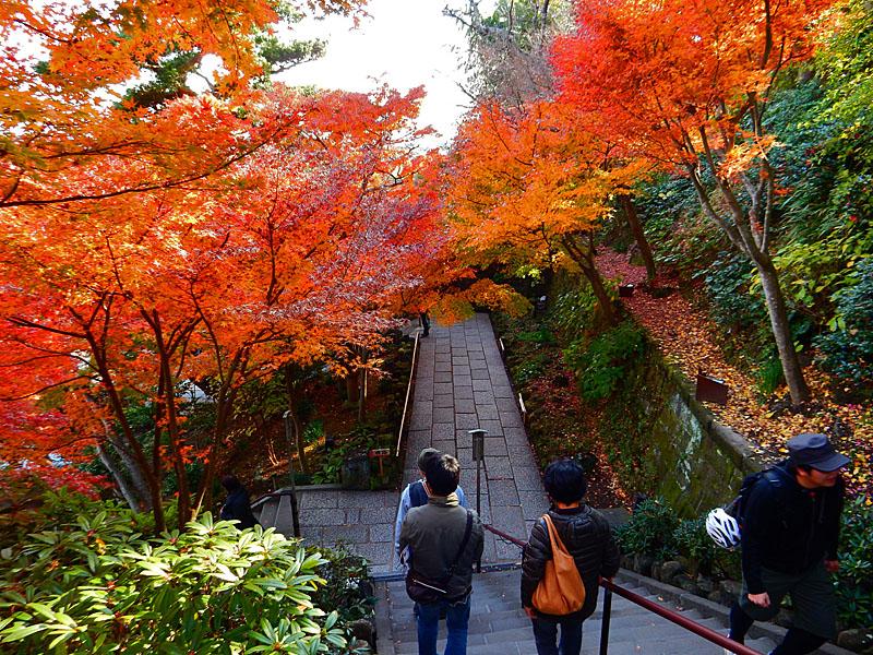141207鎌倉長谷寺の紅葉5