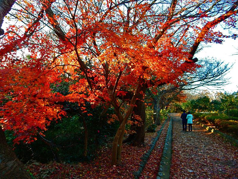141213 源氏山公園の頼朝像4