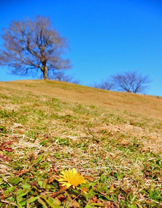 150129春の息吹1