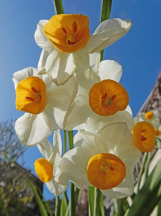150129春の息吹4