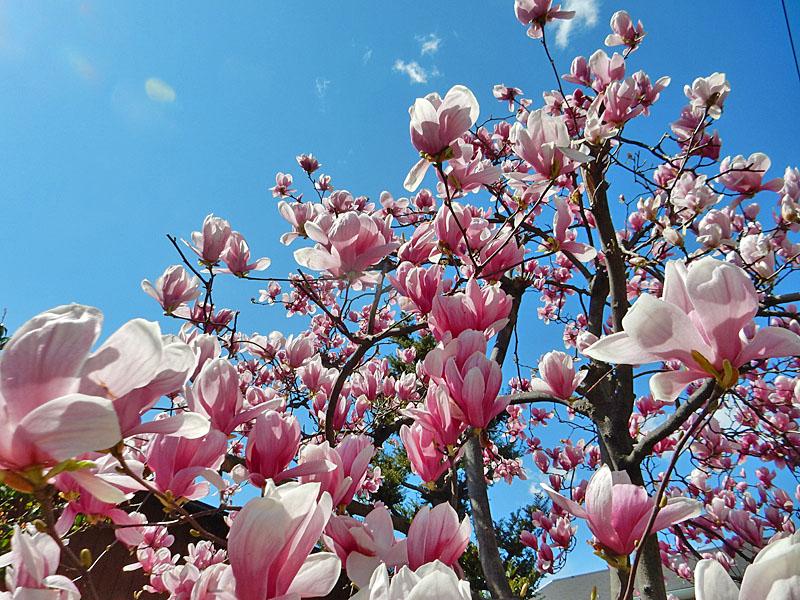 150324百花繚乱の春1