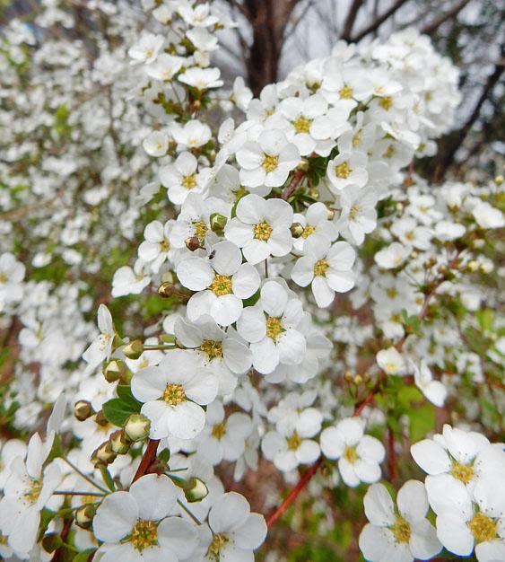 150324百花繚乱の春4