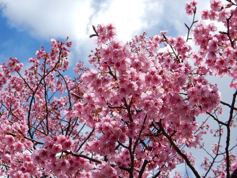 150324百花繚乱の春7