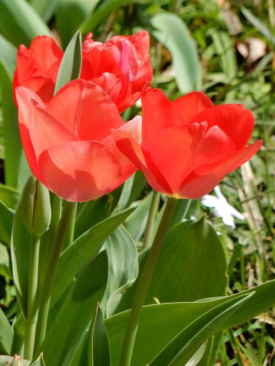 150324百花繚乱の春8