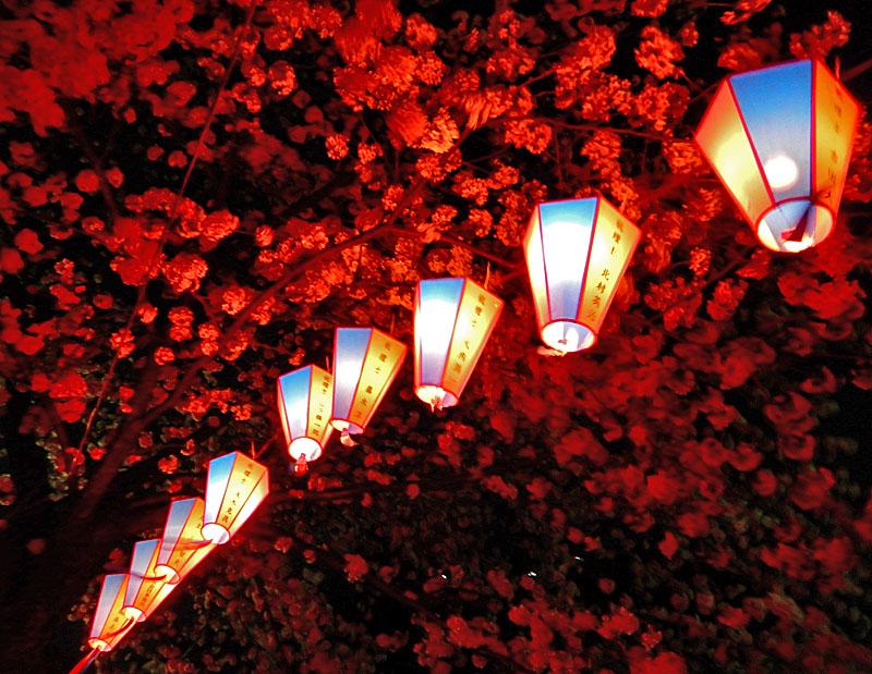 150331大岡川夜桜4