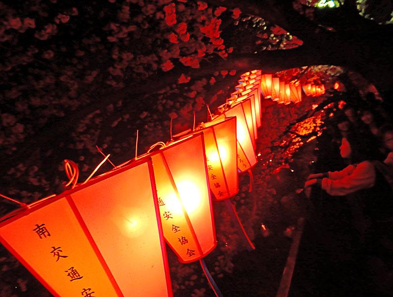 150331大岡川夜桜5
