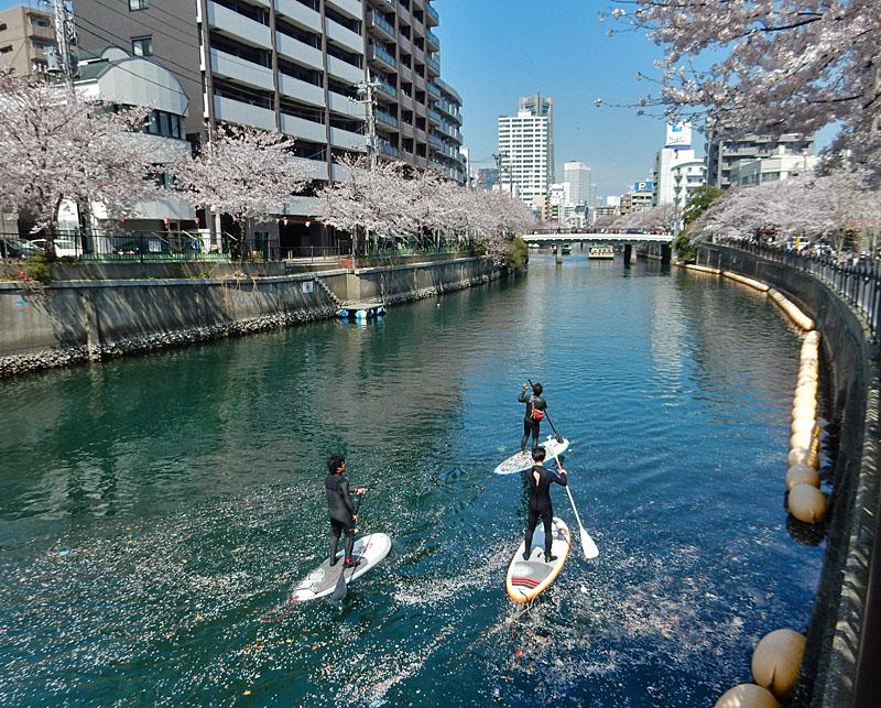 150402桜大岡川をパドボで下る1
