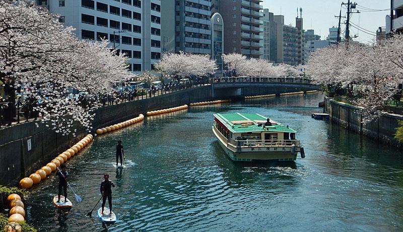 150402桜大岡川をパドボで下る2