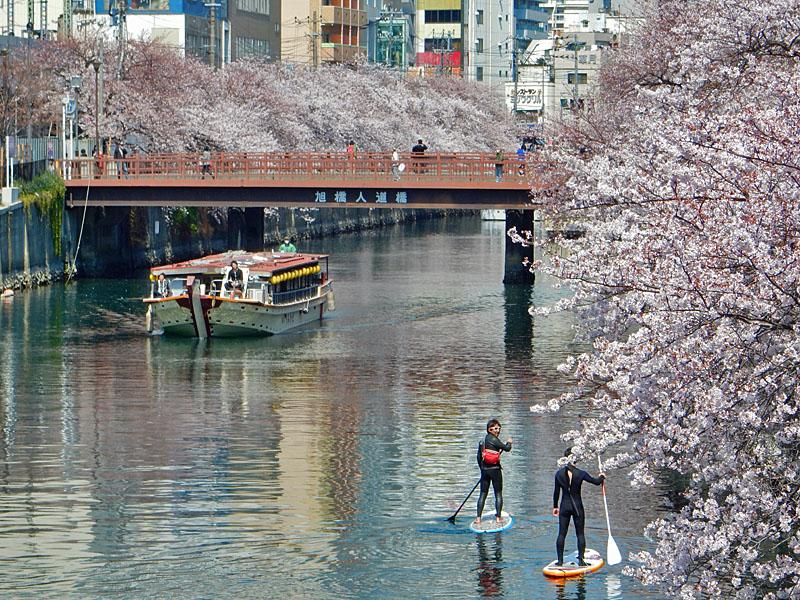150402桜大岡川をパドボで下る4