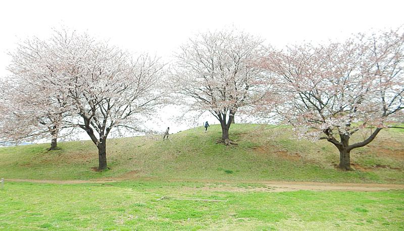 150404榎の丘と桜4