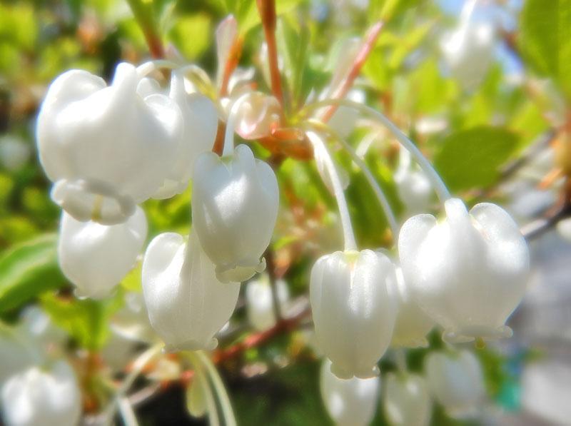 150416今日出会った花たち1