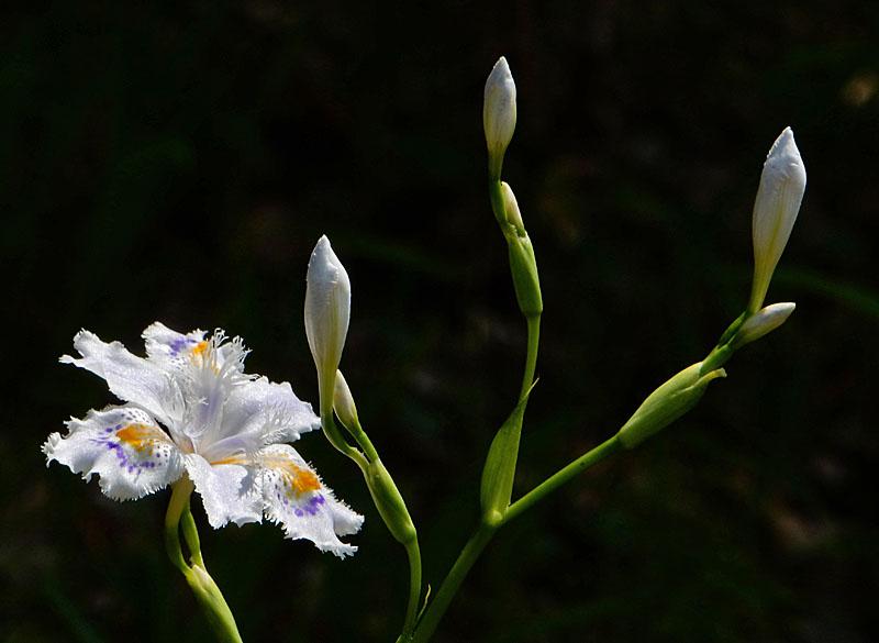 150416今日出会った花たち2