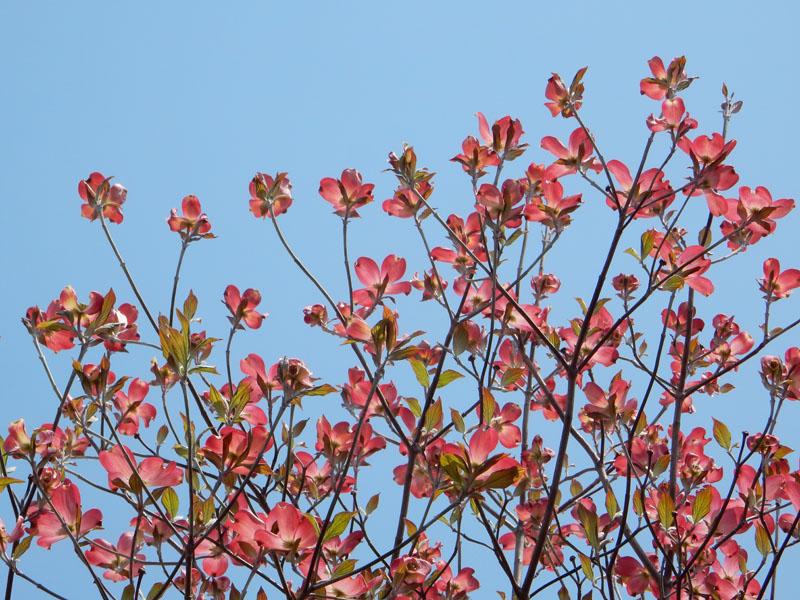150416今日出会った花たち3