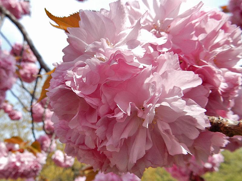 150416今日出会った花たち6