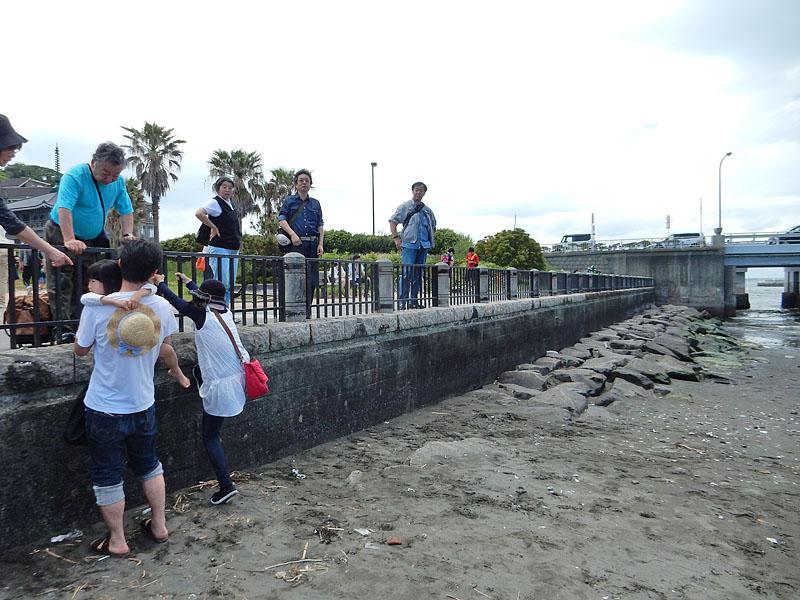 150504大潮の日江の島へ渡る5