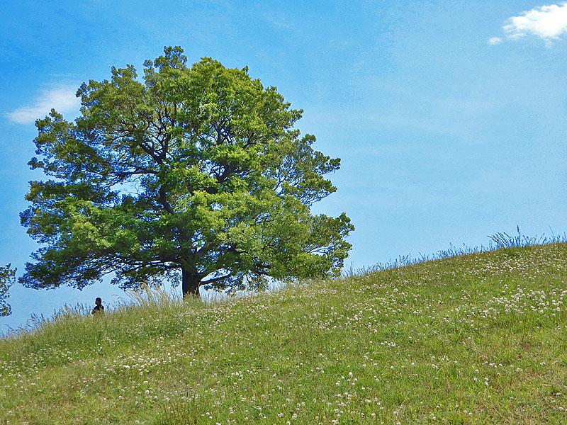 150515,5月の榎の丘5
