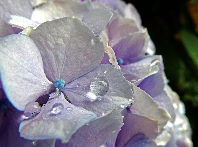 150603花と雨粒2
