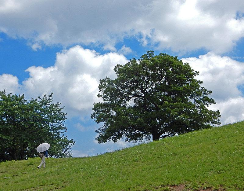 150623梅雨の晴れ間の榎の丘1