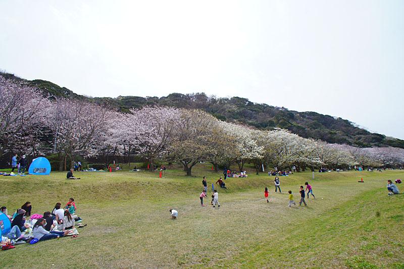 150329走水水源地の桜1