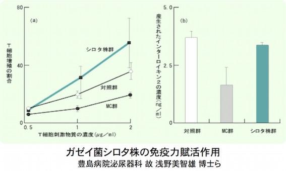 シロタ株の免疫力賦活作用図