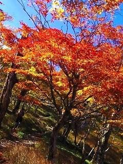 Baum 香り三昧-8