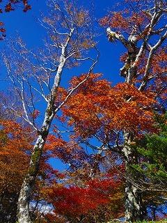 Baum 香り三昧-10