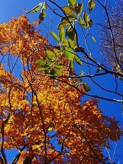 Baum 香り三昧-11